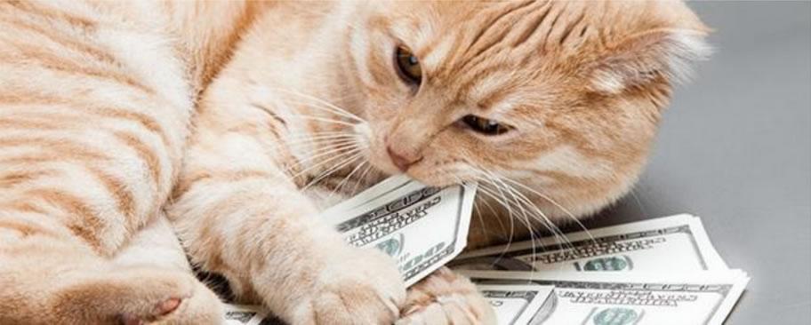 blog-pic-cat1