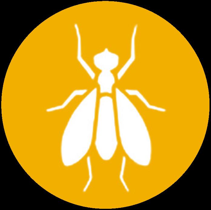 flynexx-logo